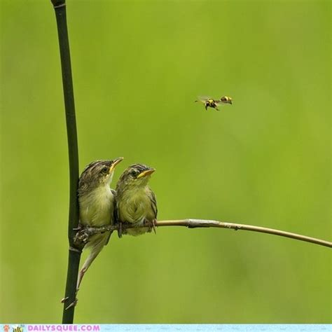 birds and the bees animals pinterest
