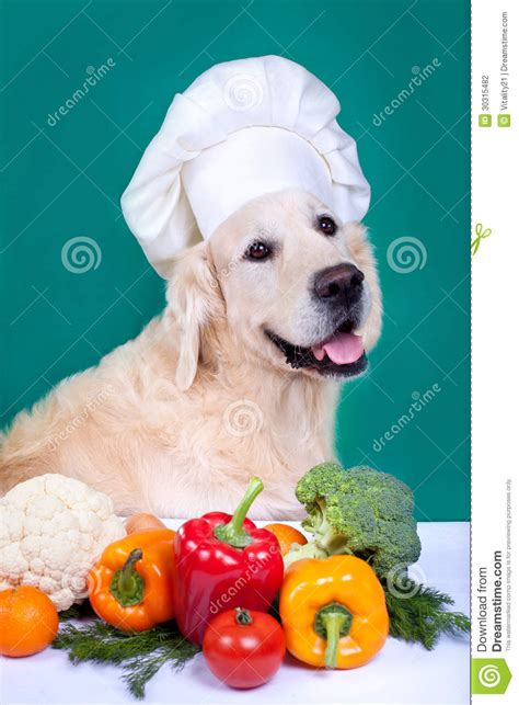 golden retriever puppy diet golden retriever cooking stock photography image 30315482