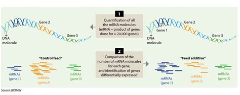 generation sequencing reveals links  nutrition