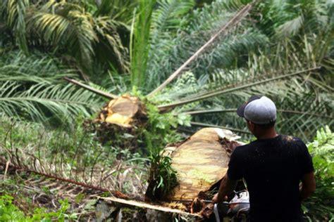Sk Ii Di Aceh by Sim Salabim 42 Ribu Hektar Hutan Lindung Di Aceh Tamiang