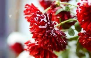 winter flowers winter flowers