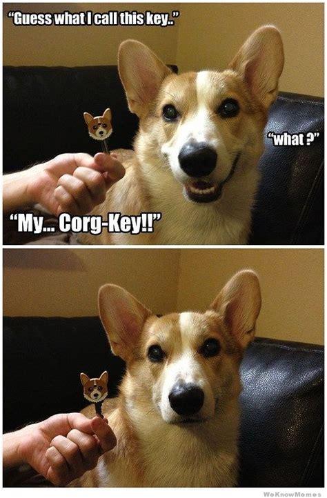 Dog Jokes Meme - corg key weknowmemes