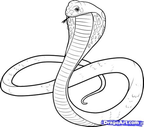 117 best snake images on pinterest snake drawing