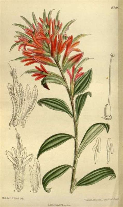 indian paintbrush tattoo 118 best images about indian paintbrush on