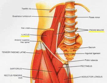 iliopsoas diagram hip iliopsoas tendonitis and iliopsoas
