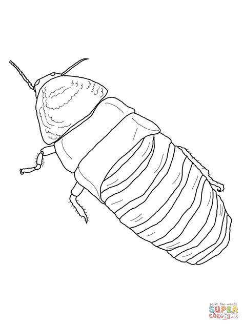 madagascar hissing cockroach coloring page free