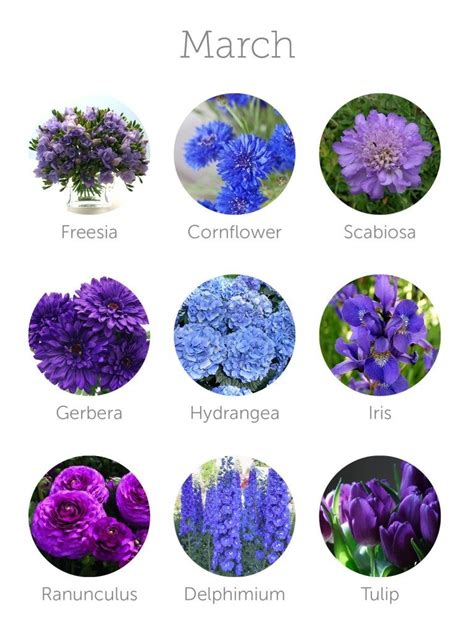 march colors the ultimate floral guide for mexico s east coast