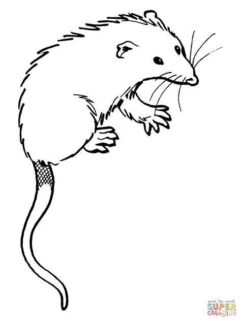 opossum free coloring pages