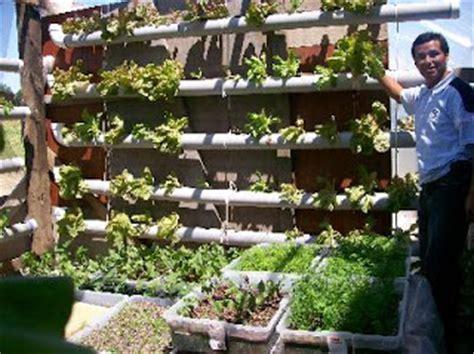 imagenes azoteas verdes hidroponia y azoteas verdes ecolog 237 a taringa