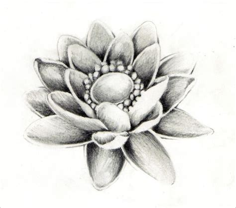 Narcisuss Hitam photos beautiful pencil lotus drawings gallery