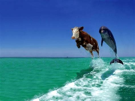 all wallpapers funny dogs wallpapers funny dolphin wallpaper funny animal
