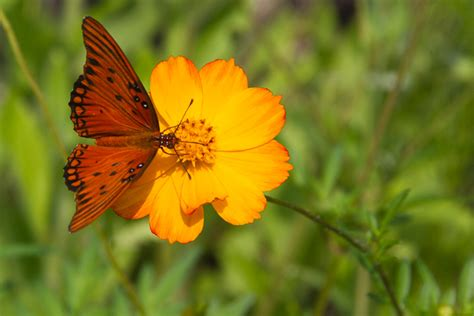 Gainesville Butterfly Garden by Escape To Kanapaha Botanical Gardens In Gainesville