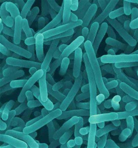 biology 100 gt freymiller gt flashcards gt domain bacteria