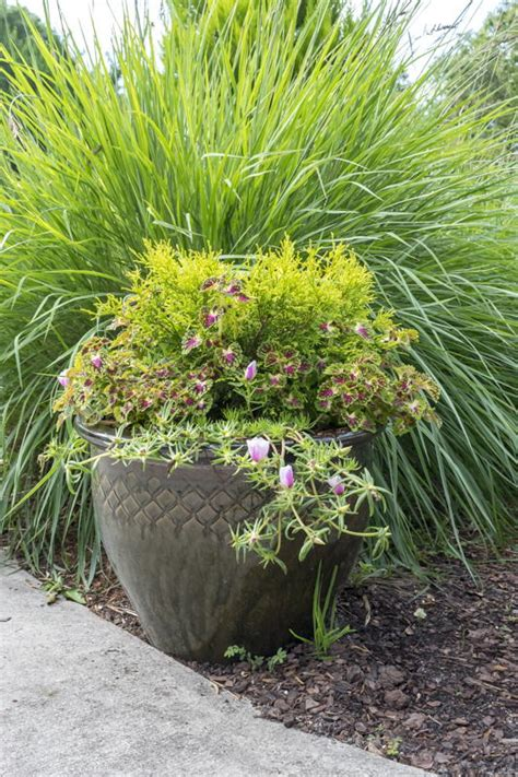 Container Gardening 101 by Container Gardening 101 Favecrafts
