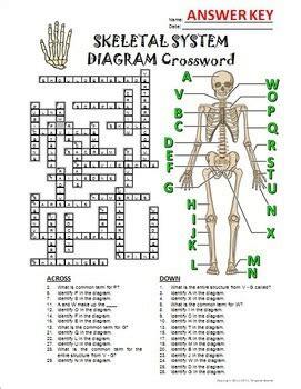 section 36 1 the skeletal system answers 100 skeletal system worksheet answers skeleton quiz