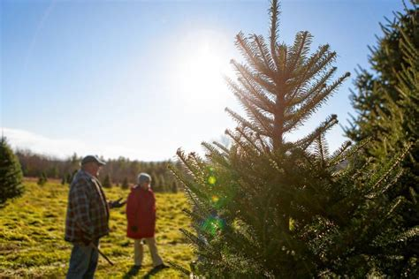 after 40 000 christmas trees clearview farm s bill and