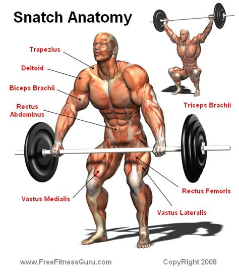 Bodybuilding Bench Press Form Snatch Anatomy Bodybuilding Enhance Latest Muscle