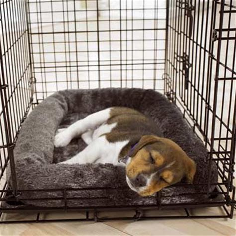 crate a puppy is crate right for your pet obedience
