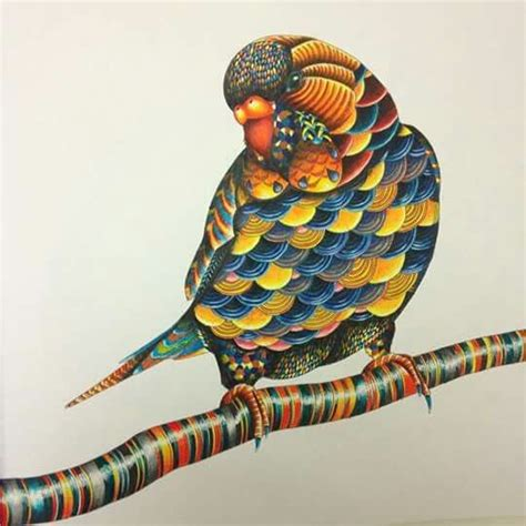 millie marotta animal kingdom colouring book art