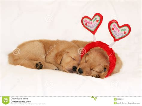 golden retriever puppies sleeping photo of golden retriever puppy with hearts