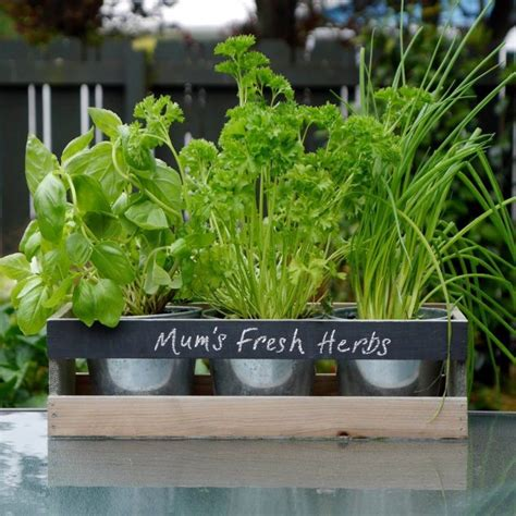 mini herb garden 14 diy mini herb garden to instantly draw your attention
