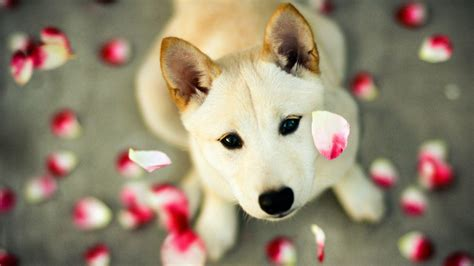 cute dog wallpaper cute dog wallpapers wallpaper cave
