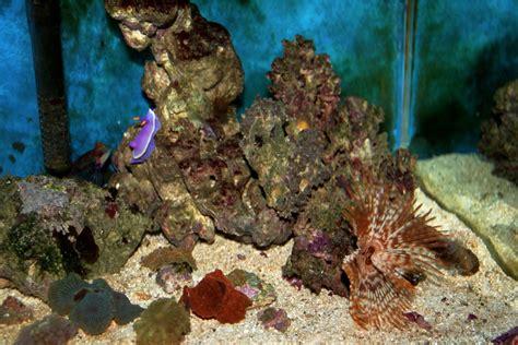 vasche per acquari marini acquari acqua dolce e acquari marini como tom jerry merone
