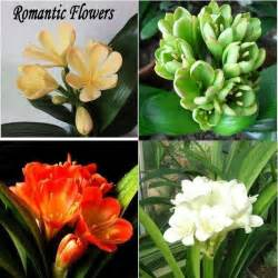 Garden Flowers Pictures And Names Garden Flowers Names 17 B 228 Sta Bilder Om Flowering Outdoor Plants P 229 Compare Prices On