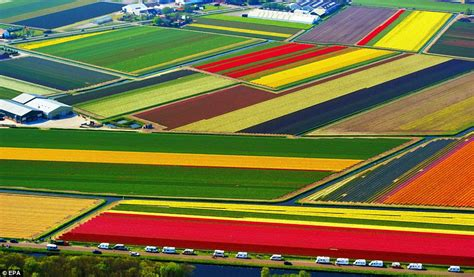 when it s spring again the dutch tulip fields so