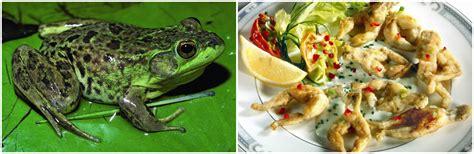 grenouille cuisine 187 top 5 weirdest foods eat kozminski