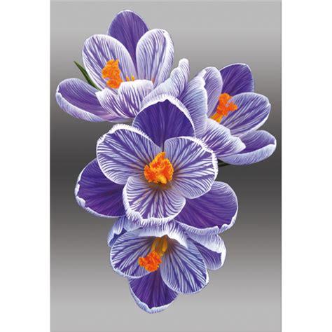fiore croco fiore croco pintdecor graphicollection quadri
