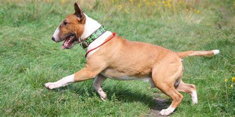 Bola Karet Mainan Anjing Feeding anjing agresif bawaan lahir atau hasil latihan merdeka