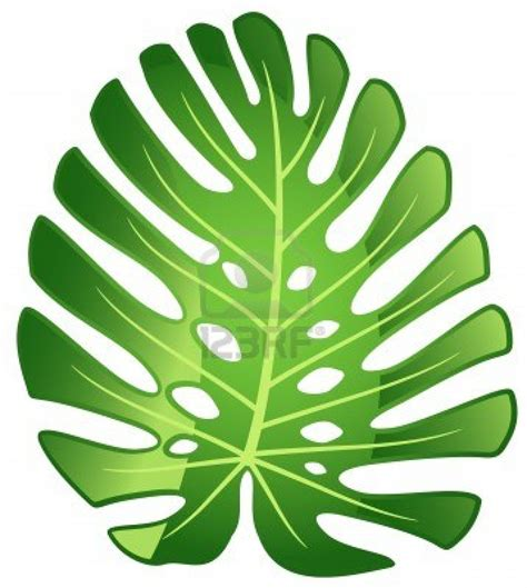 tropical plant leaves leaf tropical plant monstera vector illustration stock