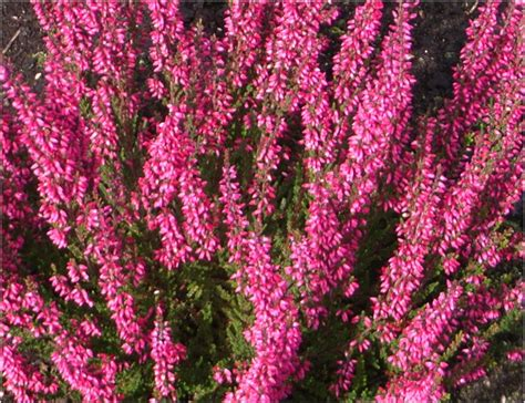 winterharte pflanzen für terrasse winterharte pflanzen fr den balkon winterharte stauden