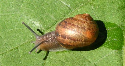 backyard snails toowoomba plants a different kettle of snails
