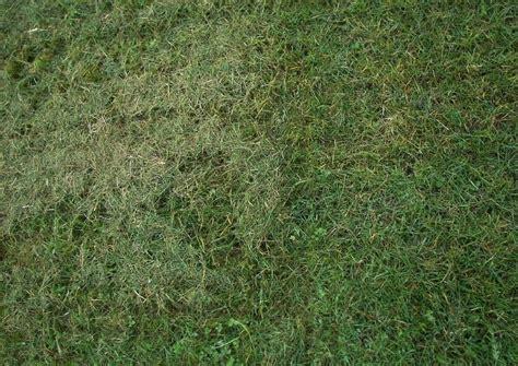 Rasenpflege Garten Gemulchter Rasen Rasenschnitt Liegen