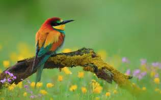 colourful birds wallpapers