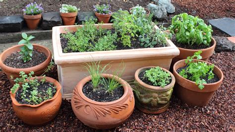 herb garden plants how to plant a culinary herb garden diy kitchen garden