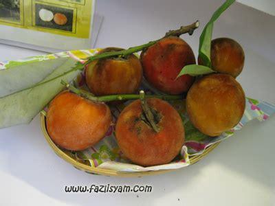 Tanaman Buah Kanistelsawo Mentega buah mentega