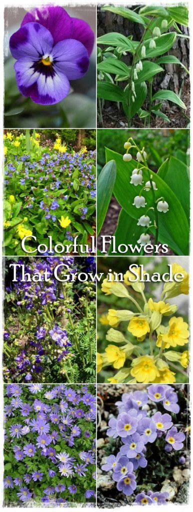 colorful shade plants 1000 ideas about colorful flowers on purple