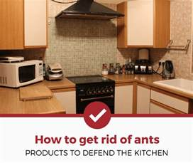 products get rid of ants in the kitchen ratings and