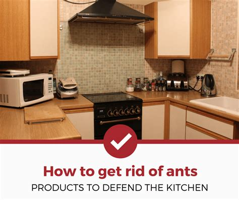 How To Get Rid Of Ants In Kitchen by Products Get Rid Of Ants In The Kitchen Ratings And
