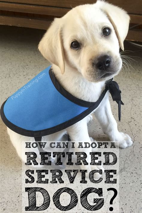 how can i adopt a retired service dog or failed guide dog puppy in training