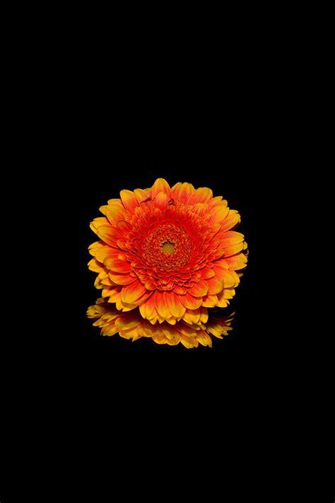 iphone wallpaper flowers iphone wallpapers iphone 5
