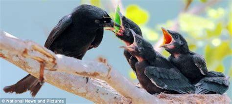 stunning wildlife photography of wild birds in taiwan