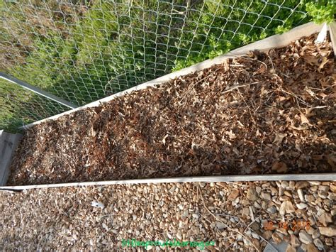 types of mulch for gardens how to mulch your garden for free sprouts learning