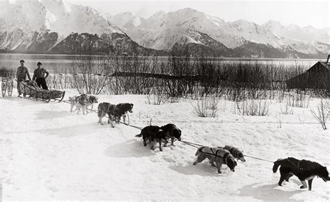 history of dogs klondike gold sled dogs www pixshark images galleries with a bite