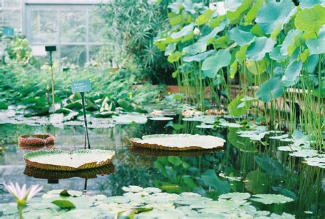 Bristol Botanical Gardens Best Of Bristol Pinterest 25 Best Images About Sd Botanical Garden Inspiration On Pinterest Gardens Bristol And San Diego