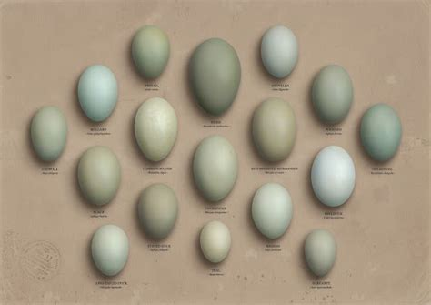 color of eggs lord duck egg color lord duck egg blue mint