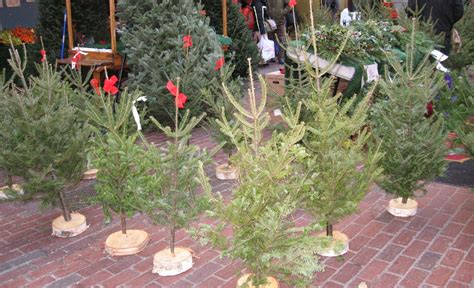 jacks christmas trees formerly eljac miami fl anali s amendment brown trees